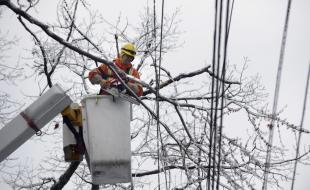 Le 23 décembre 2013, un employé de la compagnie Toronto Hydro se sert d'une tronçonneuse pour éliminer les branches gênant des lignes électriques. (Fred Lum/The Globe and Mail)