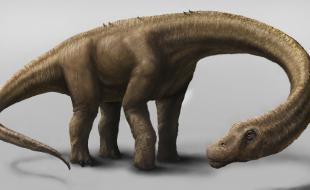 Une illustration du Dreadnoughtus. (AP Photo/Carnegie Museum of Natural History, Mark A. Klingler)