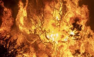 Une forêt brûle alors que le feu Bobcat augmente, hors de contrôle, près de Wrightwood, en Californie, le 18 septembre 2020. [EPA/DAVID MCNEW]
