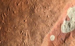 Empreintes fossilisées au Parc national de l'Île-du-Prince-Édouard (crédit photo : Patrick Brunet)